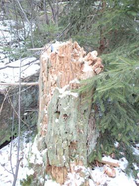 Ett hungrigt träd?