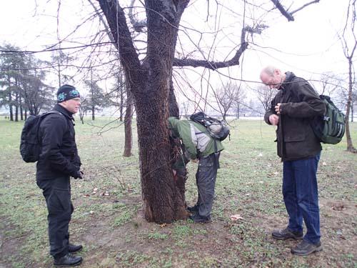 Är detta möjligen andra burken i Serbien? Eller är det den botaniskt intresserade Ingabo som försöker att tränga in i trädens hemligheter?