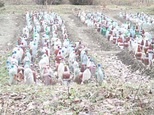Titta - här fick vi lära oss varifrån PET flaskor kommer, de odlas i Rumänien!