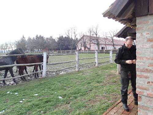 Hästmugglare