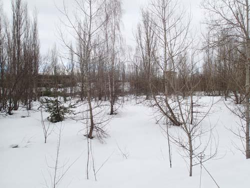 Detta är fotbollsskogen, här låg alltså en fotbollsplan, idag är pelarna - ursäkta - spelarna av trä.