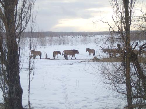 På hemvägen fick vi se dessa mongoliska hästar! Något ovanligt!