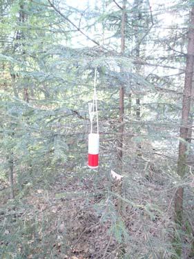 Vad är det som hänger i trädet bredvid cachen?