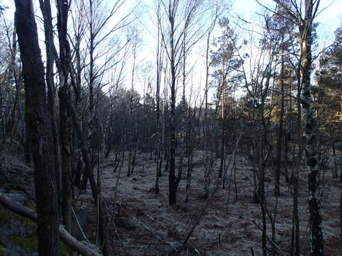 Mossmarken är ännu djupfrusen! Här är annars jaktmark för tusentals fästingar och en och annan orm.
