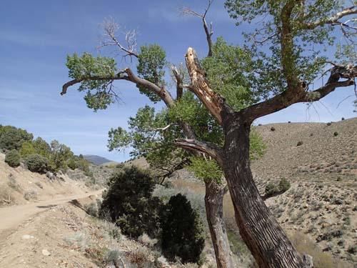 Till vår stora förvåning fanns här även stora träd!