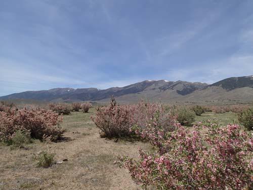 Mycket vackert med blommande buskar och de höga bergen i fjärran.