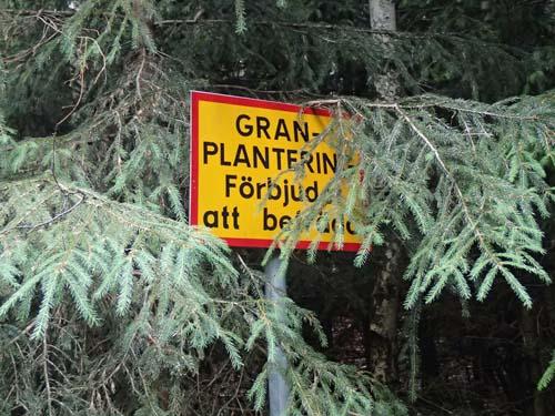 Här fick man inte gå in bland träden!