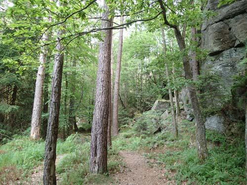Skogsmarken kring cachen.