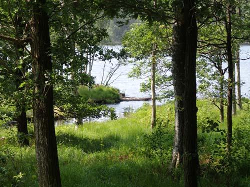 Ugglebäckens utlopp i Lilla Delsjön.