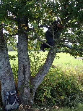 TMR68 i ett träd