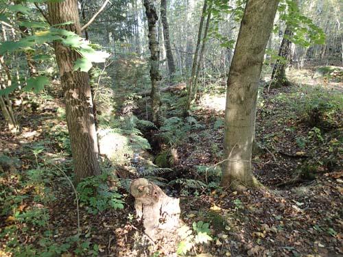 Kanalen liknar en vanlig skogsbäck men är grävd av människan för att föra bort vattnet från Gunla mosse.
