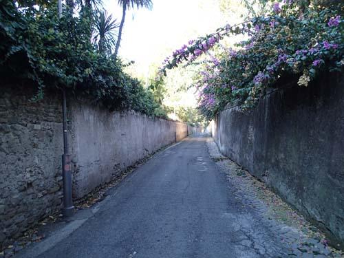Rino di Roma