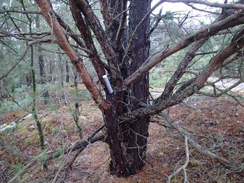 Hängande i träd, det gillar man när marken är blöt och extremt lerig.