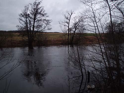 Mycket vatten i Säveån idag!