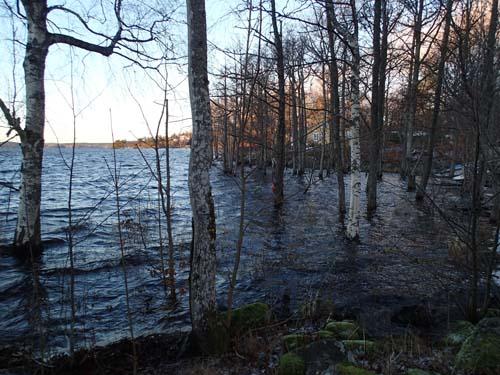 Skogarna börjar nu stå under vatten!