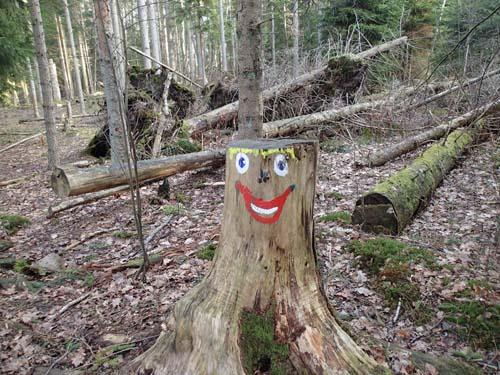 Glada stubbar i skogen!