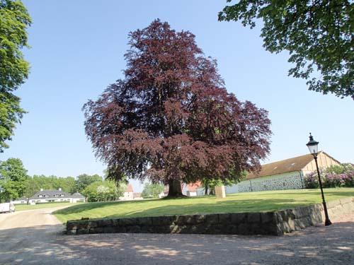 Parken vid Trollenäs