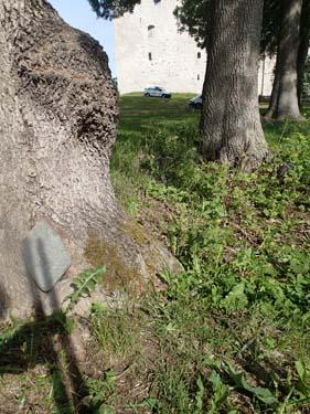 En sten vid ett träd och ett slott i bakgrunden....