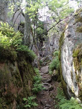 Vägen upp i Ingby bergen.