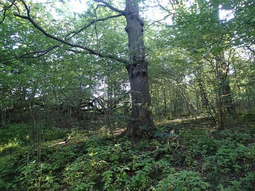 Träden är många och här döljer sig en klurig hemlighet!