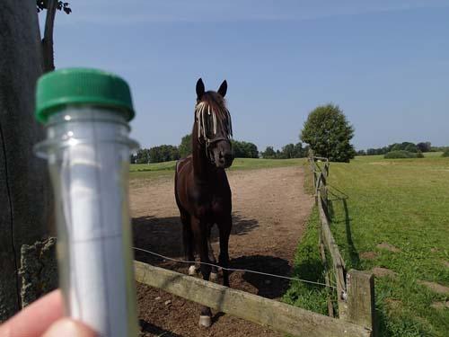 Detta är en cache - sa jag till hästen - som såg ut som ett levande frågetecken!