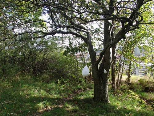 Mystiska saker som växer i träden i denna park!