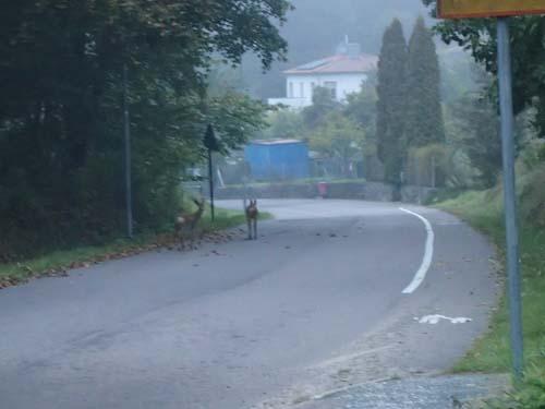 Råa-djur på Gamla Boråsvägen.