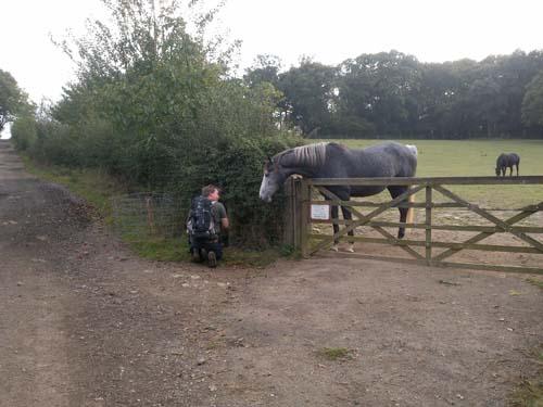 TMR68 antastas av en häst vid loggning av burken.