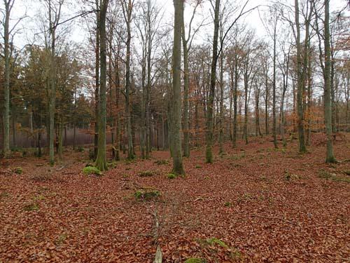 Bokskog är ett måste vid besök i Skåne!