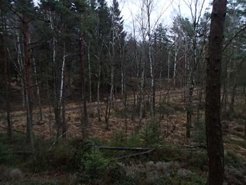 Här går Stans väg genom skogen.