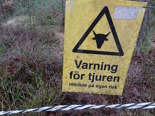 Varning för... men någon tjur såg jag inte till, vilket var tur då grinden var öppen...!