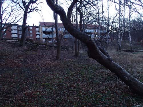 Träd-fällar-mugglare