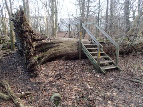 Trappor över träd ser man inte så ofta!