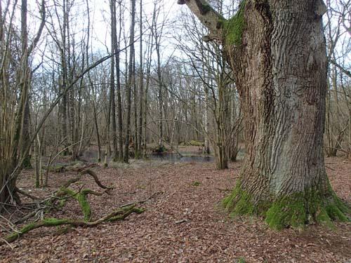 Rya skog