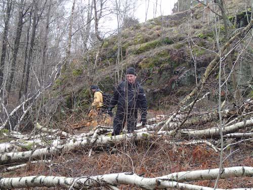 Terrängen i Änggårdsbergen kan ibland vara besvärlig och snårig.