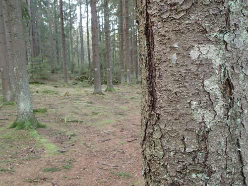 Träd nummer