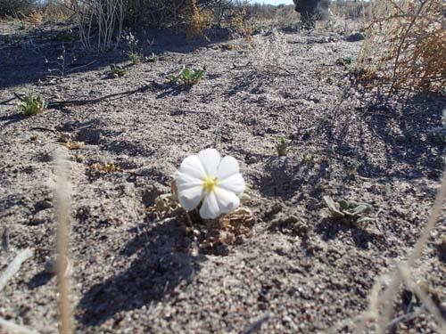 Det blommade i öknen