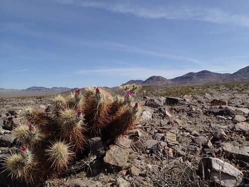 När vi nu kommit längre söder ut blev också dessa taggiga plantor allt vanligare.