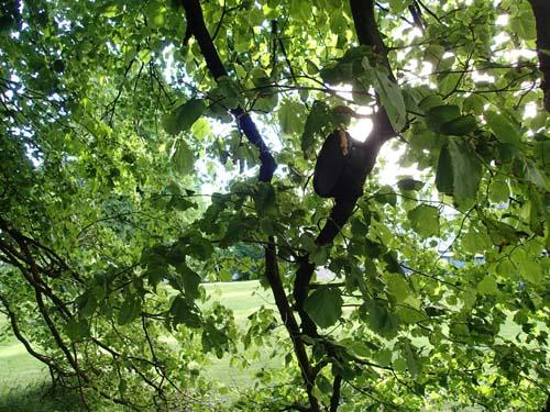 Ett typiskt burkträd!