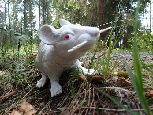 Albinomus