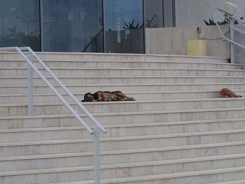 Slöa vakthundar utanför banken.