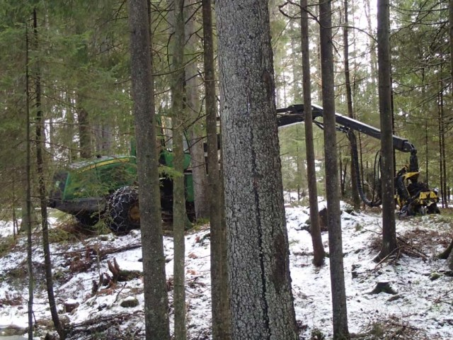 Skogsmonster