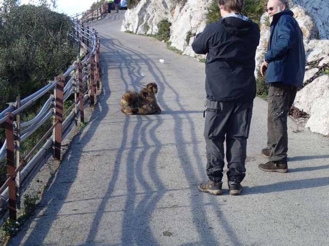 Hur många apor ser du på bilden?