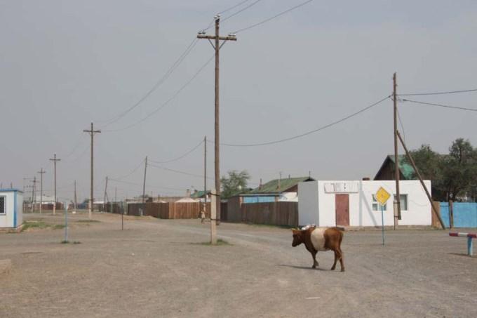 Nog finns det huvudleder även i Mongoliet!
