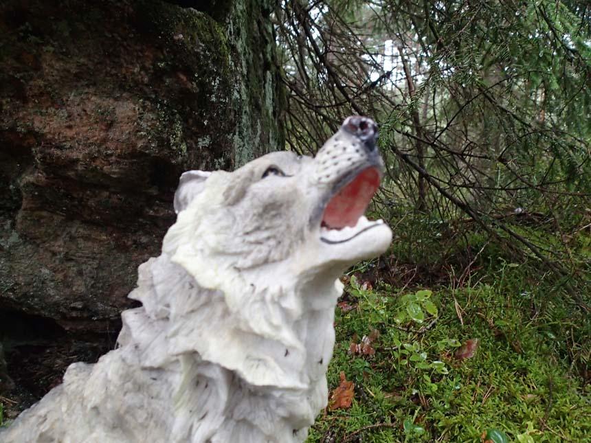 I den fula ulvens spår, raskt och oförskräckt vi gå!