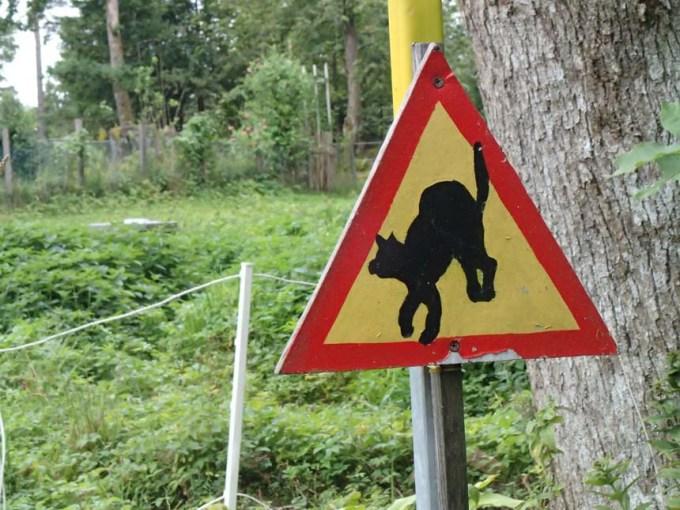 Varning för katt