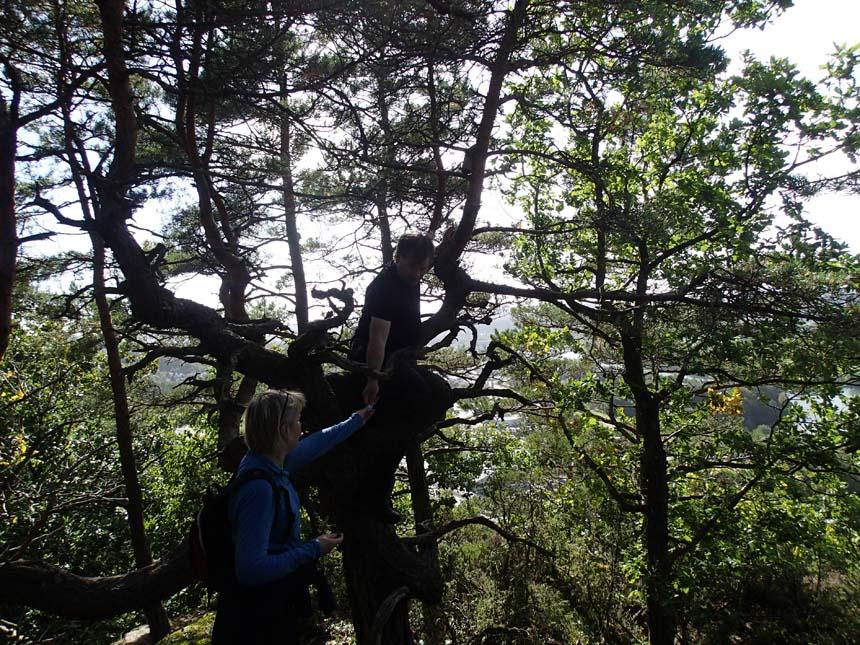 TMR68 klättrar i trädet.