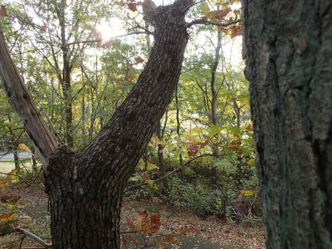 Vilken vy jag hade från trädet...!