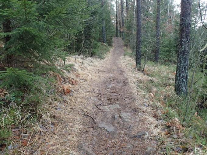 Stans väg - en bekant led genom skogen.