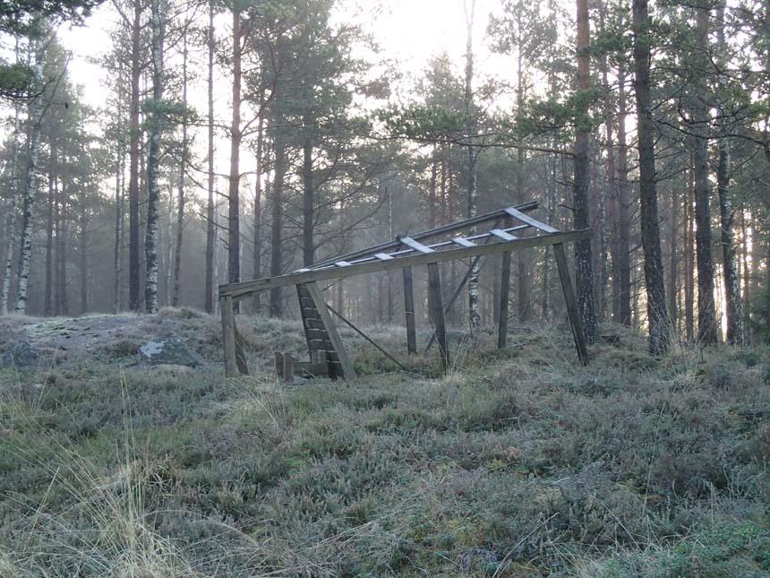 Undrar om det är älgarna som vält jakttornen i området.